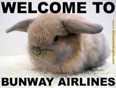 Image result for lol rabbits