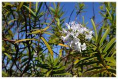 [2012 - Santo Tirso - Portugal] #fotografias #flor #flores #flower #flowers