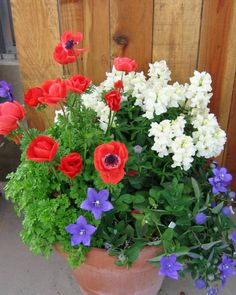 142 best red white blue flowers images on pinterest in 2018 red white and blue mightylinksfo