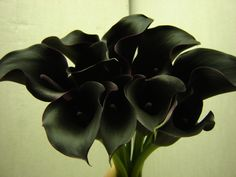 Calla Lily Renoir - Metropolitan Wholesale | Metropolitan Wholesale