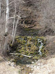 Gundersen Spring