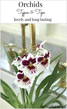 Orchids Types and Tips for Care