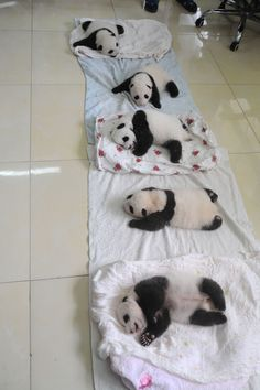 Behold: The Cutest Baby Pandas You Will Ever See  - ELLE.com (=)