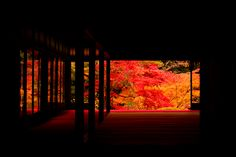 Colored leaves to look at in Nanzen-ji Temple of Kyoto. Japanese Nature, Japanese Temple, Japanese Landscape, Japanese Architecture, Japanese House, Japanese Art, Japanese Gardens, Kyoto, Kobe Japan