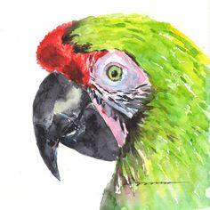 "Parrot Original Watercolor Painting by Claudia Hafner. 6x6""  #parrot #green #bird #claudiahafnerwatercolor #painting #artforsale"