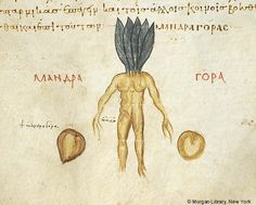 De materia medica, MS M.652 fol. 314r - Images from Medieval and Renaissance Manuscripts - The Morgan Library & Museum