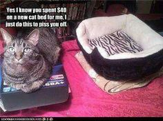 Oh yeah! 'If I cant fits I sits'