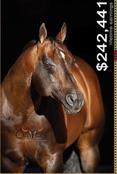 Easy Otie Whiz || Champion Reining Stallion