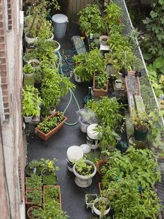 Rooftop Garden    Urban dwellers need not be left of out the joy of gardening. Fill the space on roofs, terraces and firescapes with flowers and greenery. Vary the containers for an eclectic feel.