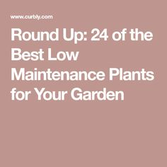Round Up: 24 of the Best Low Maintenance Plants for Your Garden