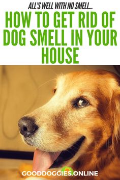 How to get rid of dog smell in the house