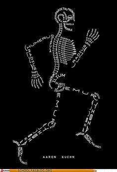 Anatomy 101: All the Bones You'll Ever Need to Know and More