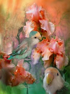 Love, blooming in all the soft colors of Spring. This painting of two peach and green lovebirds nestled among peach colored irises is from the 'Lovebird' collection of art by Carol Cavalaris.
