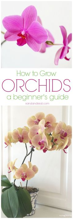 Orchids are actually EASY to grow and are so rewarding with blooms that can last for months! Once you read these easy tips, How to Grow Orchids – a beginners guide, you will be hooked on orchids forever! Orchids are actually EASY to Growing Orchids, Growing Plants, Growing Vegetables, Garden Plants, Indoor Plants, Indoor Orchids, Indoor Herbs, Orchids Garden, Air Plants