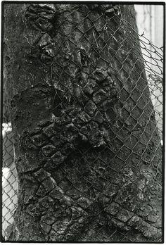 Tree and Fence, 1999 by Zoe Leonard Tattoo Photography, Street Photography, Leonards Photography, Land Art, Sculpture Art, Sculptures, City Photo, Street Art, St Bernards
