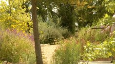 butterfly habitat Bulverde/Spring Branch Library Cent