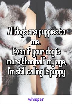 "Someone from Alhama de Murcia, Región de Murcia, ES posted a whisper in the group Single teens, which reads ""All dogs are puppies to me. Even if your dog is more than half my age, I'm still calling it puppy"" Animal Quotes, Dog Quotes, Animal Memes, All Dogs, I Love Dogs, Puppy Love, Cutest Puppy, Cute Puppies, Cute Dogs"
