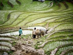 Scientists help Vietnam's rice farmers adapt to climate change, amid major drought   PreventionWeb.net