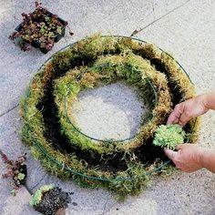 How to make a living wreath with succulents. Top plant picks for living wreath include: -- Aeoniums -- Rosary vine (Ceropegia) -- Crassulas -- Echeverias -- Euphorbias -- Haworthias -- Hens-and-chicks (Sempervivum) -- Kalanchoes -- Sedums (groundcover types)