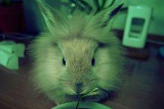 rabbit by shanghai_kiss, via Flickr