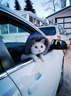 And this adventurer who is the most responsible driver on the road. | 27 Cats Who Are A Better Human Than You
