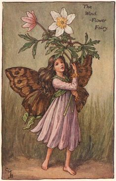 FLOWER FAIRIES/BOTANICALS: The Windflower Fairy; This is an original vintage Cicely Mary Barker Flower fairies colour print. It is not a modern reproduction, c1935; approximate size 11.0 x 7.0cm, 4.25 x 2.75 inches