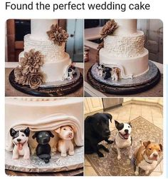 This is a perfect wedding cake for any dog loving couple out there. Dog Cake Topper Wedding, Funny Wedding Cakes, Themed Wedding Cakes, Wedding Humor, Wedding Stuff, Perfect Wedding, Dream Wedding, Spring Wedding, Memes Gretchen