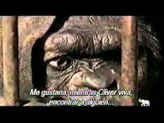 Oliver casi humano - YouTube