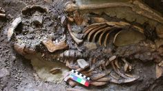 Europe's fourth ancestral 'tribe' uncovered - BBC News