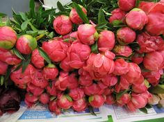 Peonies from Lassen Ranch #CAflowers #cagrown