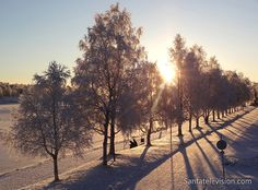 Image: early winter in Rovaniemi – trees with snow next to kemijoki river – sunlight through snowy trees Helsinki, Santa Claus Village, Lapland Finland, Snowy Trees, Photos Voyages, Arctic Circle, Lofoten, Baltic Sea, Where To Go