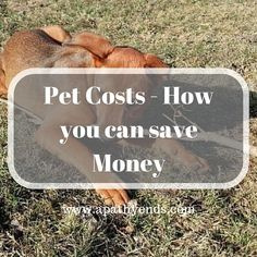 Before I even get into the costs, our dog is worth every penny! But, that doesn't mean you can't find ways to save a few bucks.