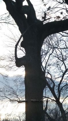 """""""Reapers Aren't Grim""""  This tree enticed my camera.......I saw a scythe holding figure.....(the Reaper perhaps)........looking out from beyond the trunk.....do you see him?"""