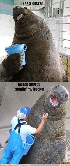 Me has a bucket to