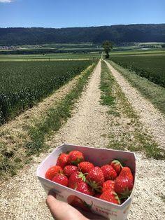 Blog über das Reisen und wandern. Zurzeit vorallem Wandern in der Schweiz. Fernziel ist der Fernwanderweg E1 Switzerland, Summertime, Vineyard, Outdoor, Blog, Adventure, Round Round, Home, Viajes