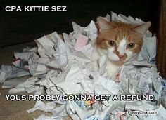Funny Cat Picture. When CPA Kitty Does Your Taxes