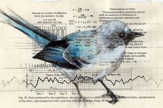 Birds on books and found papers by Paula Swisher