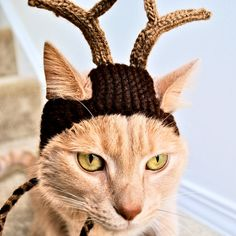 Reindeer Costume for Cats Hand Knit Cat Hat by bitchknits on Etsy