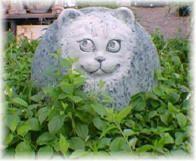 Katten uit de tuin weg houden, weren van katten. Kat planten waar katten niet van houden honden te koop