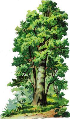 Oblaten Glanzbild scrap die cut chromo  Baum tree XL 23cm