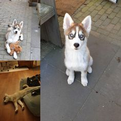 Please have a read through some of our happy pomsky owners testimonials. We pride ourselves in our testimonials. Some great testimonials from loving homes Express My Gratitude, Pomsky, Meeting New People, Dutch, Advice, Puppies, Facebook, Website, Learning