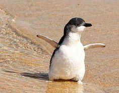 Penguin ♥