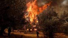30/4/2017 Eerste bosbrand in Griekenland dit jaar. Europa. Griekenland. weer / klimaat : Op het Griekse vakantie-eiland Zakynthos woedt een felle bosbrand.  De brandweer heeft deze nog niet onder controle. Het is de 1e grote bosbrand in Griekenland dit jaar.