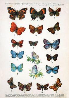 Plansch med fjärilar    Poster with butterflies