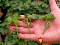 5 Creative Ways To Grow Small Flower Gardens Vegetable Garden Tips, Planting Vegetables, Small Flower Gardens, Small Flowers, Gardening For Beginners, Gardening Tips, Texas Gardening, Acid Loving Plants, Greenhouse Growing