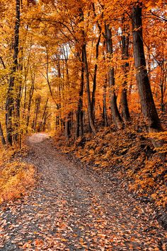 The Autumn Road. Source plus.google.com