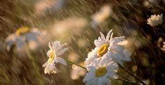 Βροχή και μετά ζέστη: Κίνδυνοι και επιπτώσεις από την υγρασία και την αποπνικτική ατμόσφαιρα: http://biologikaorganikaproionta.com/health/244669/
