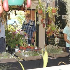 South Coast Orchid and Exotic Plant Fair 2019 This year Our Orchid and Exotic Plant Fair 2019 will be held at Stephward Estate Uvongo Margate, South Coast, South Africa on Friday 8 November 8.30am till 4.30pm Saturday 9 November 8.30am till 4.30pm  Entrance is R15 for visitors, children under 10years free. Tea/Coffees, Lunches ,Drinks and Cash Bar services will be available in the Tea Garden or Pooldeck. Rare Plants, Exotic Plants, November 8, Lunches, South Africa, Orchids, Entrance, Wedding Venues, Coast
