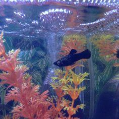 Aquariumvisje