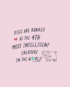 Pigs are smart, playful, loving creatures, not inanimate objects to be abused and exploited. Vegan Facts, Vegan Memes, Vegan Quotes, Vegetarian Quotes, The Animals, Vegan Animals, Reasons To Be Vegan, Why Vegan, Statements